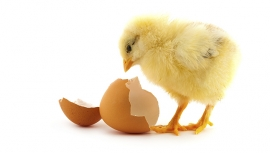 Brand attitudes: sometimes a chicken, sometimes an egg